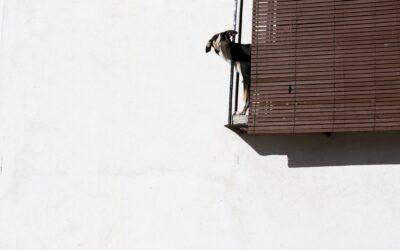 La comunidad de vecinos contra las mascotas ruidosas, ¿pueden echarlas del edificio?